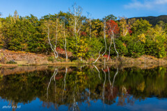 秋のまいめの池