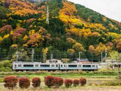 紅葉と電車
