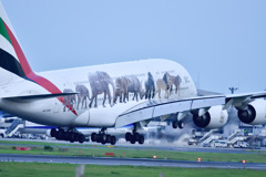 「Emirates Fly Better」