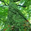 大木 苔むす