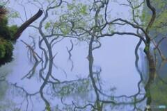 漂う霧の不動池