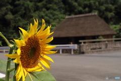 里山の夏風景(3)
