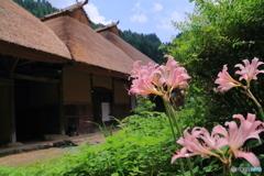 里山の夏風景(2)