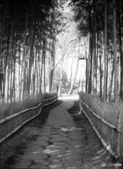 竹林のある公園