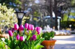 春!愛にきてください。