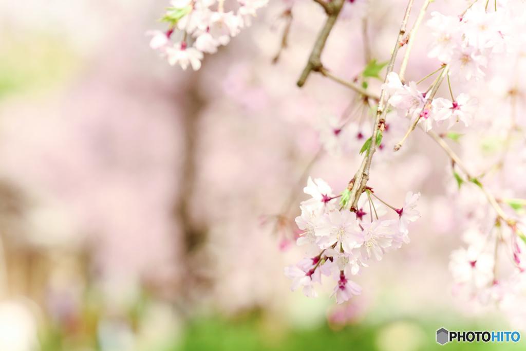 心弾む春 〜インスタ映え〜