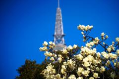 こちらも春の色
