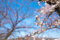 爽やかな春の風とともに