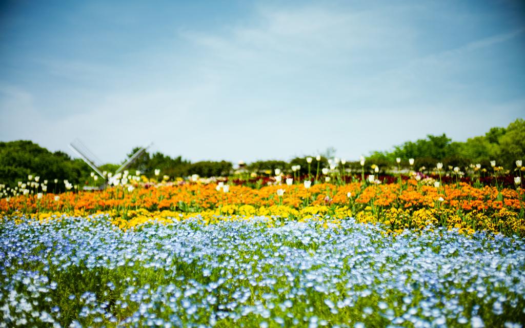 初夏の夢♪