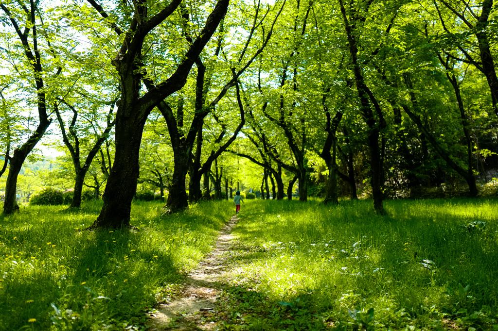 探検隊~初夏の木洩れ日へ