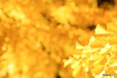 銀杏の葉イルミネーション