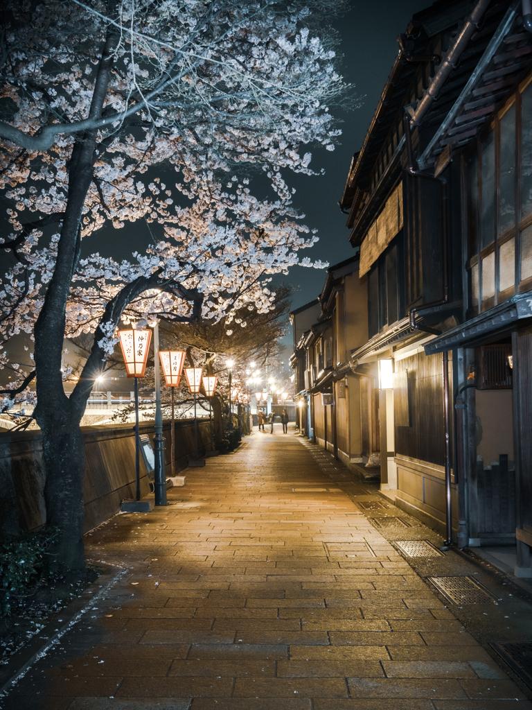 古都の夜桜