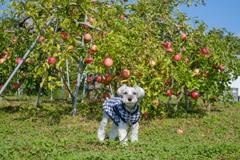 リンゴとておくん