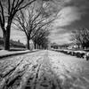 雪の散歩道 (足跡)