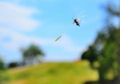 アリさん空を飛ぶ