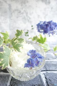 16日目の紫陽花