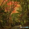 尾関山公園 紅葉狩り 5