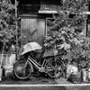 自転車に傘