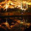 松島紅葉ライトアップ1