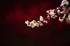 輝く春・萌ゆる想い.。.:*♡
