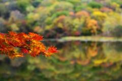 秋を映す花模様☆。.:*・゜