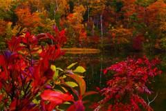 秋色のむこうがわ☆。.:*・゜