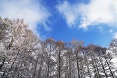 碧空に粉雪が舞うWhite Xmas☆。.:*・゜