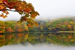 ❁。.*・٭•秋の花•。❁。.*・゚