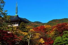 秋色に染まる善光寺