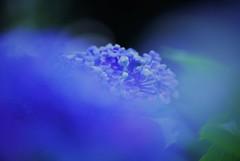 Deep Blue☆。.:*・゜