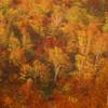 Autumn leaves♬*.+゜