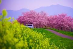 春をかさねて♪。.:*・゜