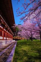 桜の園♬*.+