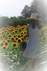 君と見た黄色い花の記憶。