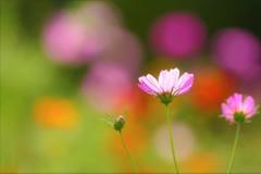 パステルカラーの花園☆。.:*・゜