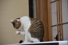 顔を洗う猫ちゃん。