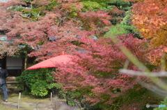 紅葉と和傘。