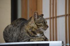横顔、猫ちゃん。