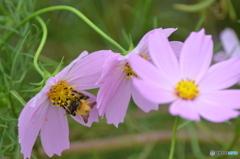 蜂さん、蜜が美味しい。