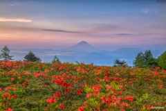 ツツジと富士