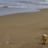 波打ち際を散歩だよー。