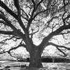 生命 (いのち) の樹 ②