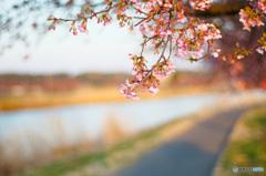 春は思い切りビビットカラー