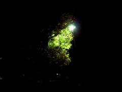 夜、古いカメラで
