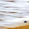 波打つ浜辺