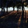 林に差す光