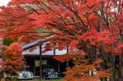秋色に包まれて .。✿