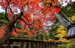 Leaves turn red in autumn