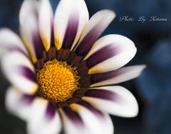 Treasure flower  Ⅰ  .。✿