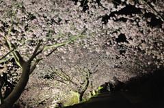 桜模様 Ⅴ ~桜降る夜~